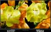 Sony KD-65XG8196 front on