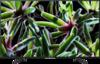 Sony KD-65XG7005 front on