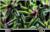 Sony KD-49XG7073