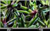 Sony KD-49XG7073 front on